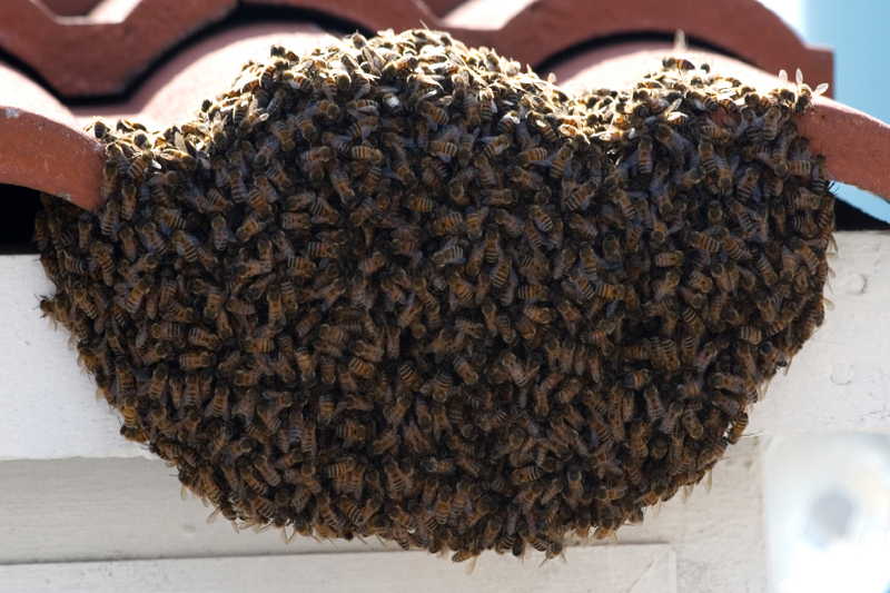 Bee Removal - Bee Removal Jacksonville FL, Love Honey Bee Removal